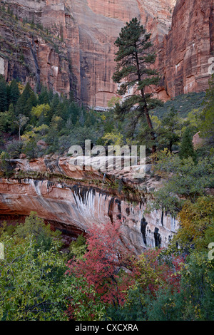 Evergreens, red maples, and red rock on the Emerald Pools Trail, Zion National Park, Utah, United States of America - Stock Photo