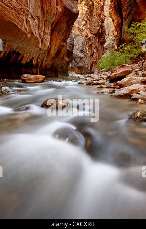 Cascade in The Narrows of the Virgin River, Zion National Park, Utah, United States of America, North America - Stock Photo