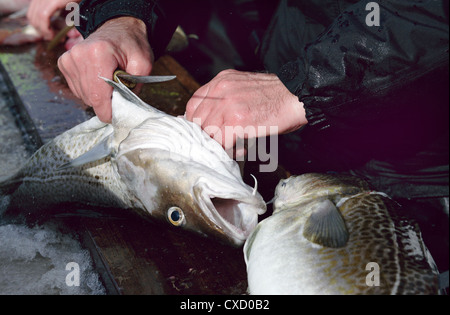 Wismar, a cod is excluded - Stock Photo