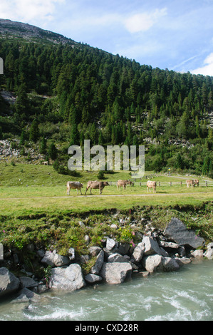 Austria, Zillertal High Alpine nature Park Hochgebirgs Naturpark near Ginzling, Tyrol - Stock Photo