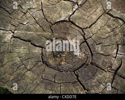 Stump in Villa Borghese Gardens, Rome, Italy, Europe - Stock Photo