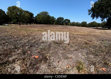 Dry grass in a field, the effect of a drought. - Stock Photo