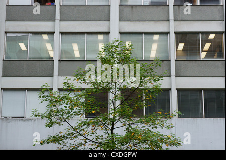 Green tree in front of a nondescript office building - Stock Photo