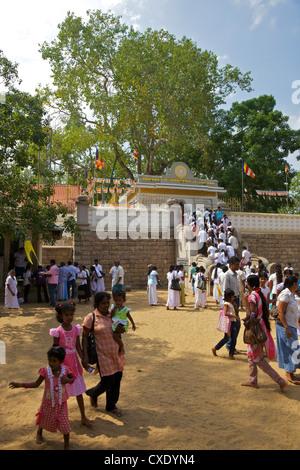 Buddhist pilgrims Sri Maha Bodhi, sacred bodhi tree planted in 249 BC, Unesco World Heritage Site, Anuradhapura, - Stock Photo