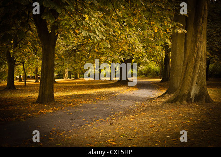 Autumn path in Regents Park, London, England, United Kingdom, Europe - Stock Photo