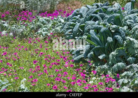 The gardens at Boone Hall Plantation near Charleston, South Carolina. - Stock Photo
