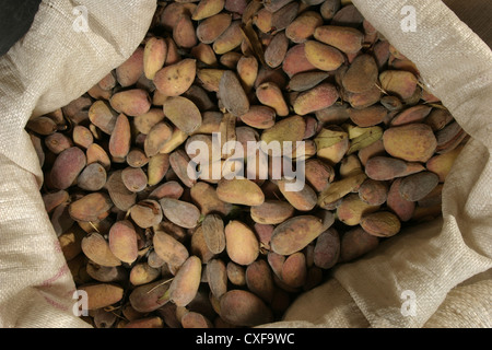 Picture: Steve Race - Freshly harvested Llargueta almonds in sacks, Catalunya, Spain. - Stock Photo