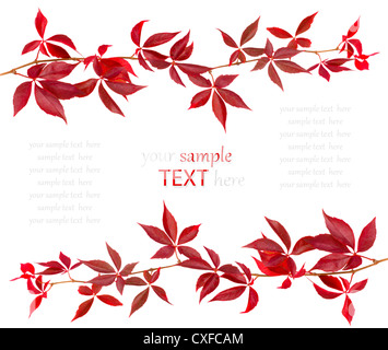 Red autumn leaf isolated on white background, with room for text - Stock Photo