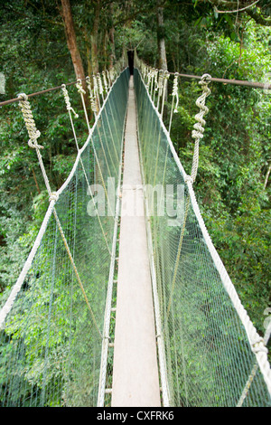 Canopy Walk in Mt. Kinabalu National Park - Stock Photo