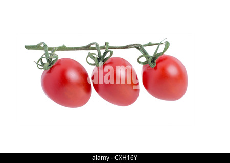 Mini or Cocktail Tomatoes egg shaped on the vine - Stock Photo