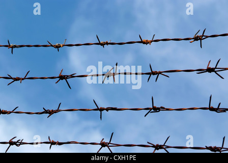 Barb wire fence and blue sky blackground - Stock Photo