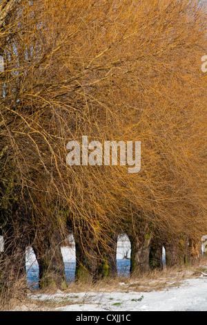 Winter in Kampinoski National Park near Warsaw, Masovia, Poland, Europe, - Stock Photo