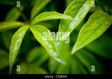 Close-up of Water Drops on Leaves - Stock Photo