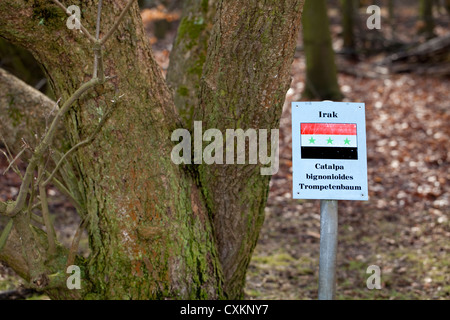 Sign with the national flag and a tree of  the states Germany has diplomatic relations with, Iraq, Southern catalpa, Cologne, Ge