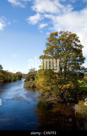 Riverside view of Trees in Autumn on the River URE near Leyburn, North Yorkshire Dales and National Park, UK - Stock Photo