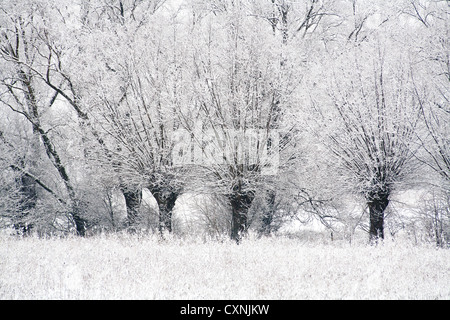 Winter in Kampinoski National Park near Warsaw, Masovia, Poland, Europe, - Stock Photo