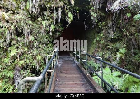 Elk284-2349 Hawaii, Big Island, Volcanoes National Park, Thurston Lava Tube - Stock Photo