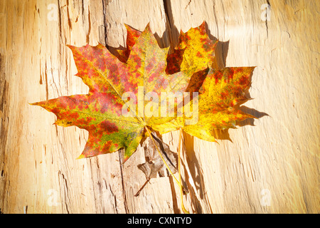 composition of autumn Leaves over wooden background - Stock Photo