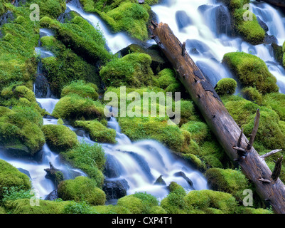 Clearwater falls. Umpqua National Forest, Oregon - Stock Photo