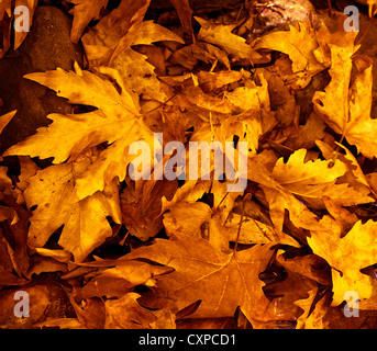 Photo of grunge leaves background, abstract autumnal backdrop, orange october foliage, beauty plant, dark golden - Stock Photo