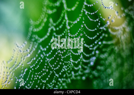 Close up of a spider's web covered in rain drops in Worcestershire, UK - Stock Photo