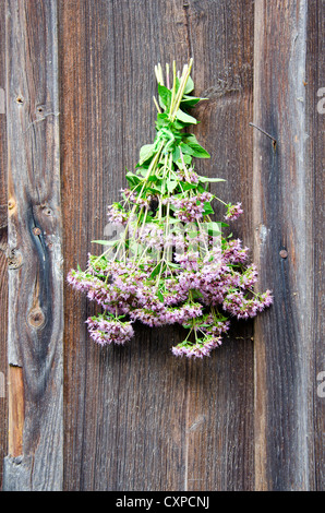 wild marjoram medical flowers bunch on old wooden house wall - Stock Photo