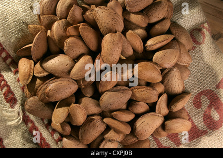 Picture: Steve Race - Freshly harvested Llargueta almonds still in their shells, Catalunya, Spain. - Stock Photo