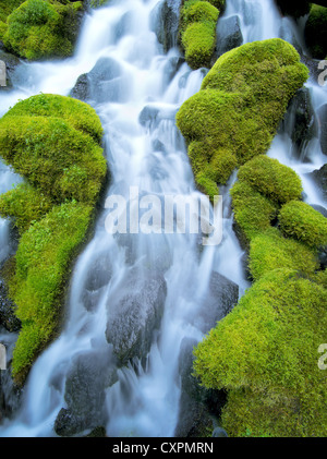 Clearwater falls with moss. Umpqua National Forest, Oregon - Stock Photo