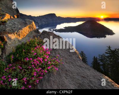 Sunrise and penstemon. Crater Lake National Park, Oregon mountain wildflowers - Stock Photo