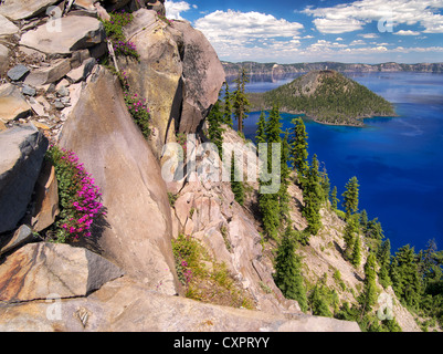 Penstemon growing on edge of Crater Lake. Crater Lake National Park, Oregon wildflowers in cliff - Stock Photo