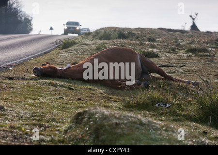 A pony has been hit and killed on the road by a car or lorry in the New Forest National Park, UK - Stock Photo