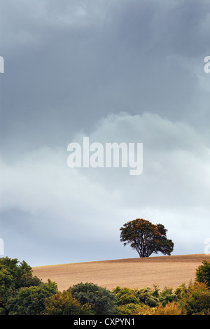 Rainclouds building up over an isolated tree - Stock Photo