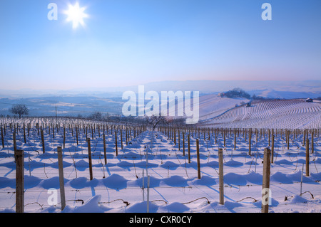 View on vineyards on snowy hills under clear blue sky with shining sun at winter in Piedmont, Northern Italy. - Stock Photo