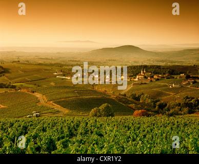 Rural landscape between Vinzelles and Saint-Amour-Bellevue, Saone-et-Loire, Bourgogne, France - Stock Photo