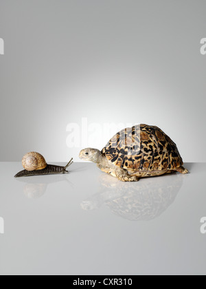 Snail and tortoise - Stock Photo