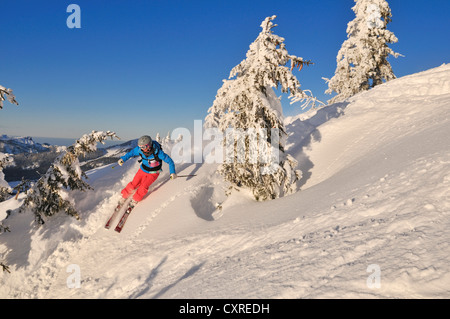 Skier downhill skiing on Steinplatte mountain, Reit im Winkl, Chiemgau, Bavaria, Germany, Europe - Stock Photo