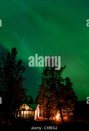 Illuminated wall tent, cabin, green northern polar lights, Aurora borealis, spruce trees, near Whitehorse, Yukon - Stock Photo