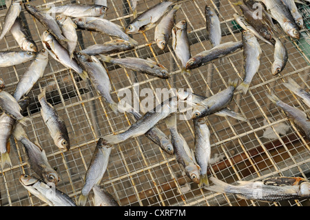 Fish spread to dry, Tai O Fishing Village, Lantau Island, Hong Kong, China, Asia - Stock Photo