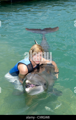 Tourist playing with a common bottlenose dolphin (Tursiops truncatus), dolphin show, Hawks Cay Resort, Florida Keys, - Stock Photo