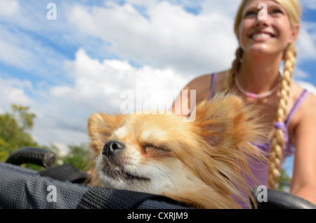 Woman with a Chihuahua in a basket riding a bicycle - Stock Photo