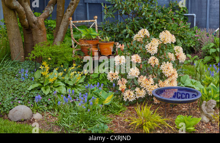 Vashon-Maury Island, WA Spring garden bed with blooming rhododendron, grape hyacinth, hostas, and Japanese forest - Stock Photo