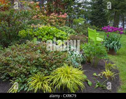 Perennial garden featuring astillbe, Japanese forest grass, hellebores, trillium, tulips and pieris with a chartreuse - Stock Photo