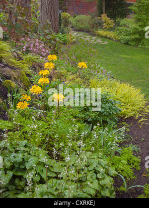 Vashon-Maury Island, WA: White flowering heuchera and yellow flowering deciduous azalea accent a woodland garden. - Stock Photo
