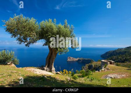 Miramar estate and Sa Foradada headland at Valldemossa, Valldemosa, Mallorca, Majorca, Balearic Islands, Spain, - Stock Photo