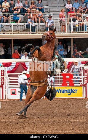 A Cowboy Riding A Bareback Bronc Event At A Rodeo In New