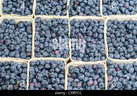 Freshly harvested blueberries or bilberries (Vaccinium myrtillus), at the weekly farmers' market, Freiburg im Breisgau - Stock Photo