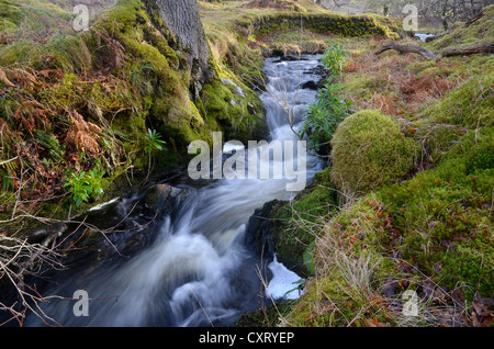 Small stream, a creek with clear water and green moss in winter, Western Ross, Highlands, Scotland, United Kingdom, - Stock Photo