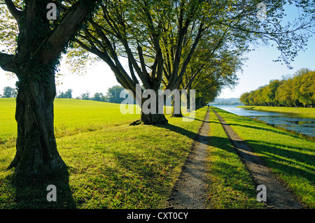 Path and row of trees at the water on Herreninsel island, Lake Chiemsee, Chiemgau region, Bavaria, Germany, Europe - Stock Photo
