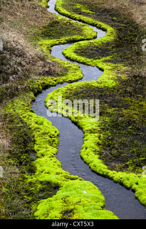 A meandering creek, surrounded by bright green moss, Highlands of Iceland, Europe - Stock Photo