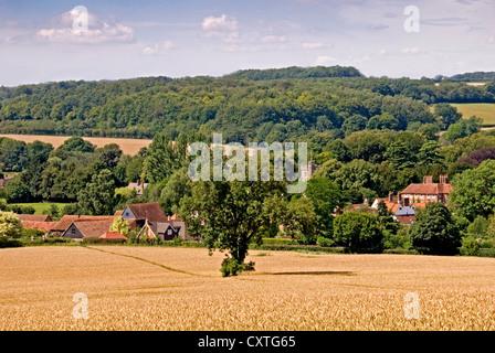 Bucks - Chiltern Hills - wheat field in high summer sunlight - Litte Missenden village beyond - wooded hillsides - Stock Photo